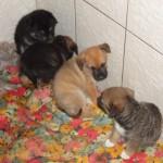 Fred, Gacek, Gufi, Suzi
