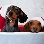 christmas_animals_640_12